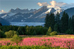 Classic Juneau view of the Mendenhall Glacier with fireweed in the foreground.  It's hard to put a new spin on this scene, as it's been shot from seemingly every angle, but I gave it a shot...
